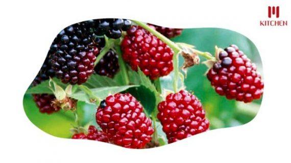 Buah Boysenberry yang Jarang Dikenal Namun Kaya Manfaat